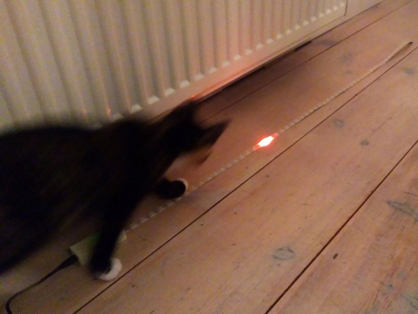 cat led strip toy cropped